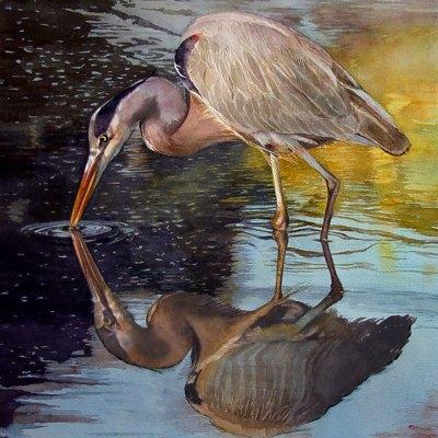wading heron at dusk