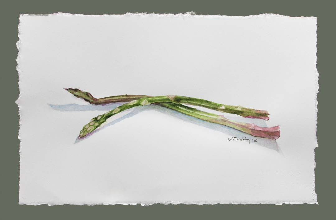 watercolor of two asparagus