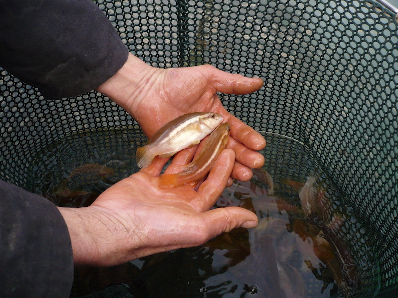 Helping a fish project win a Scotland Food & Drink Award