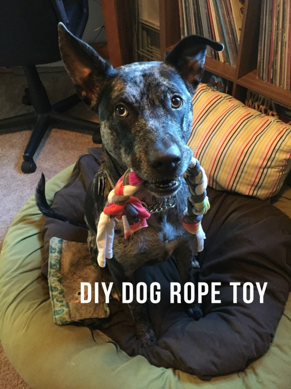 Shelby Clarke - DIY Dog Rope Toy