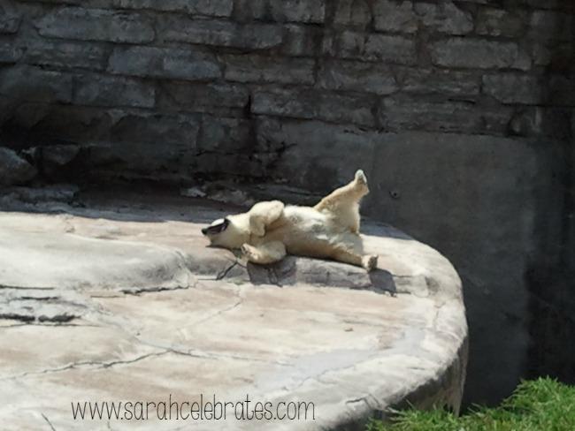 Wordless Wednesday - Polar Bear