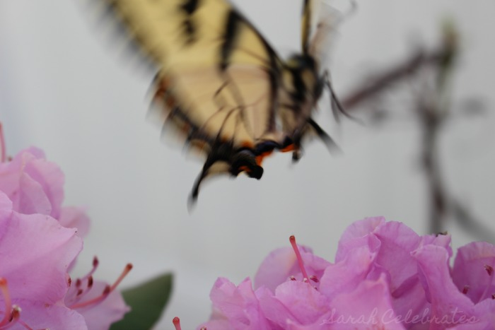 SCsundaysnap - Butterfly And She's Off - Sarah Celebrates