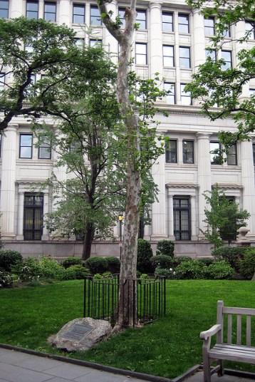 Washington Square moon tree