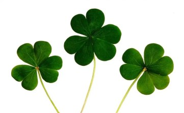 Three clovers representing the Angel Number 7 meaning you are lucky and are in essence being rewarded for you choices and decisions.