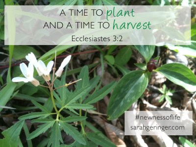 A time to plant and a time to harvest. Eccl. 3:2 #newnessoflife #bible #biblestudy