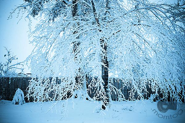4-WinterWonderland_2010