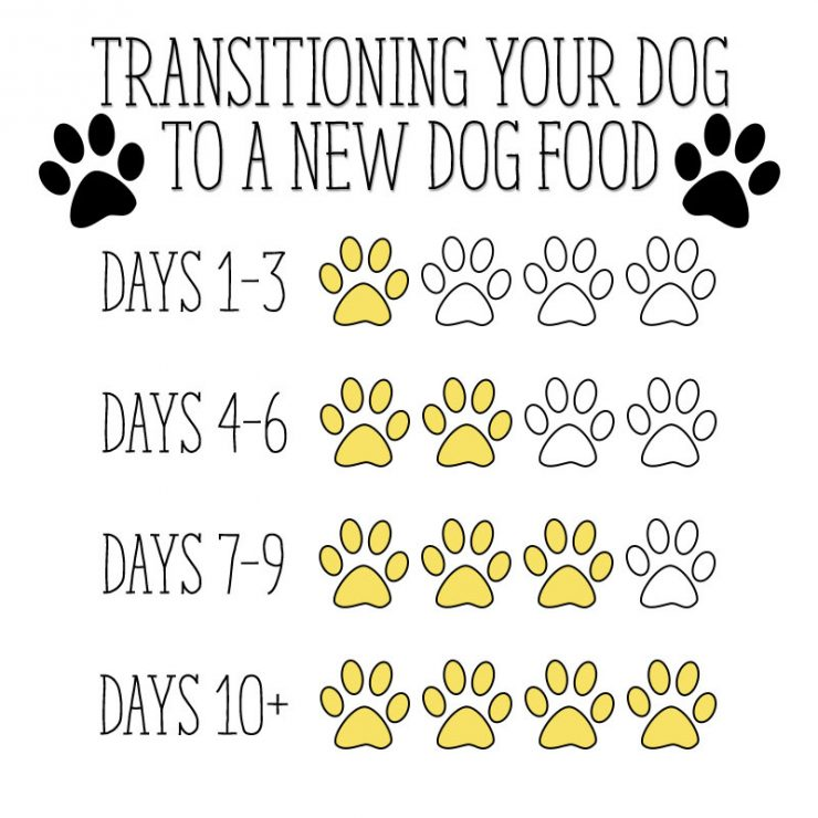 Transitioning Your Dog To A New Dog Food