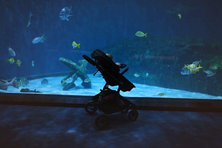 Tips For Visiting The Aquarium