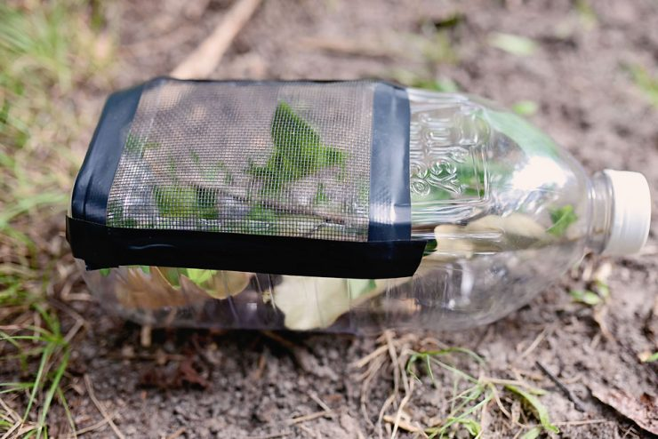 DIY Bug Catcher with Upcycled Juicy Juice Bottle