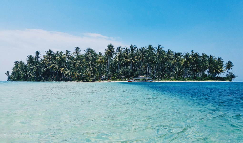coconut trees on deserted island