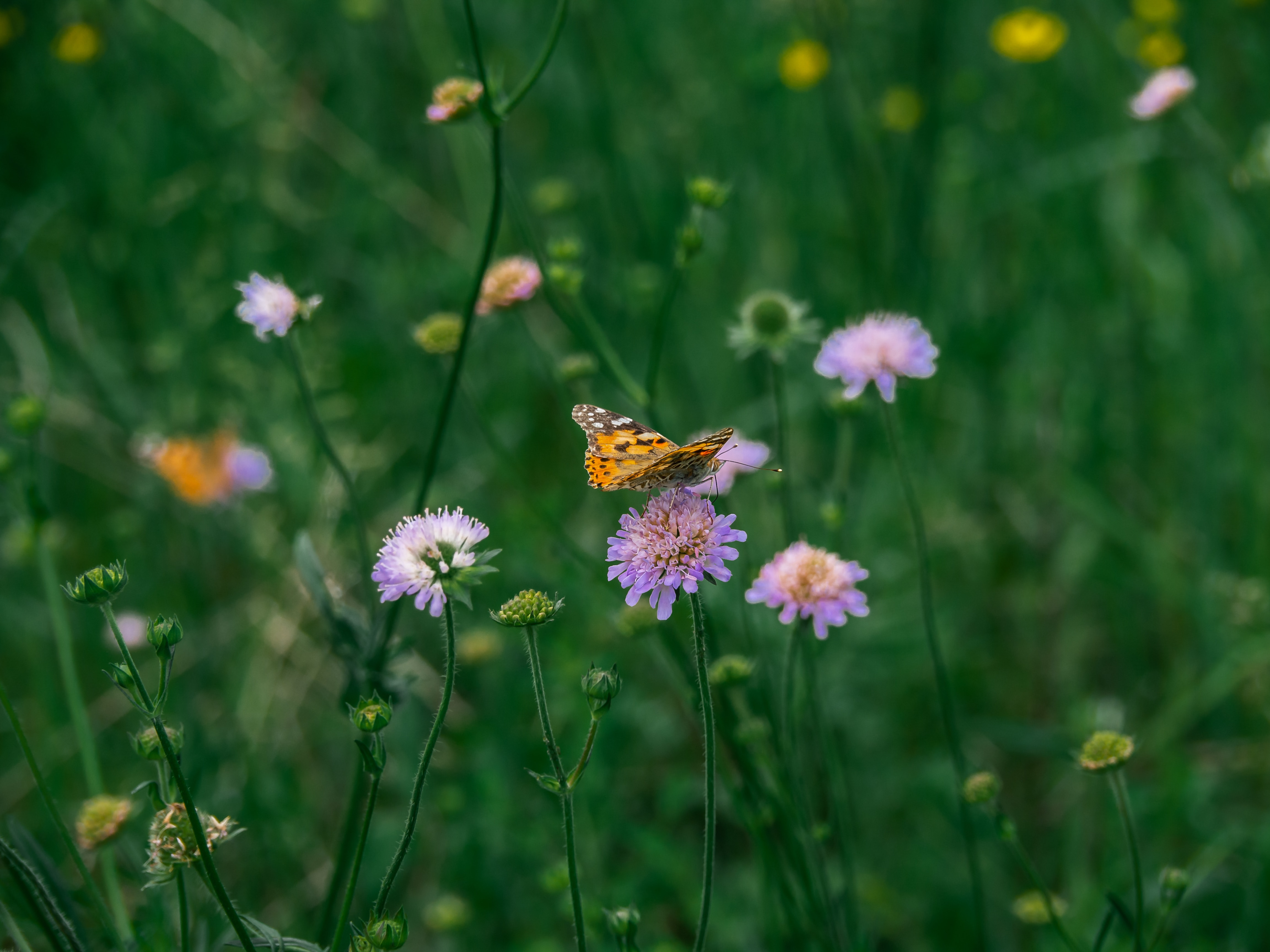 flowers in field with close-up of butterfly