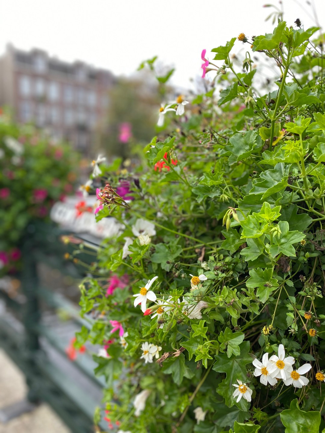 Flowers in focus with houses in the background