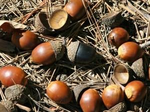 nuts-60812_640