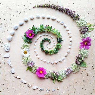 Succulent Spiral