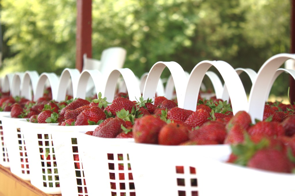 Spring Family Fun: Stawberry Picking    Sarah Sofia Productions