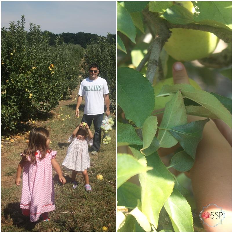 Fall Family Fun: Apple Picking || Sarah Sofia Productions