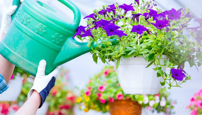 Does this time of year leave you feeling anxious on how you'll afford the kind of yard that will make you proud? Here's how to landscape your yard for less.