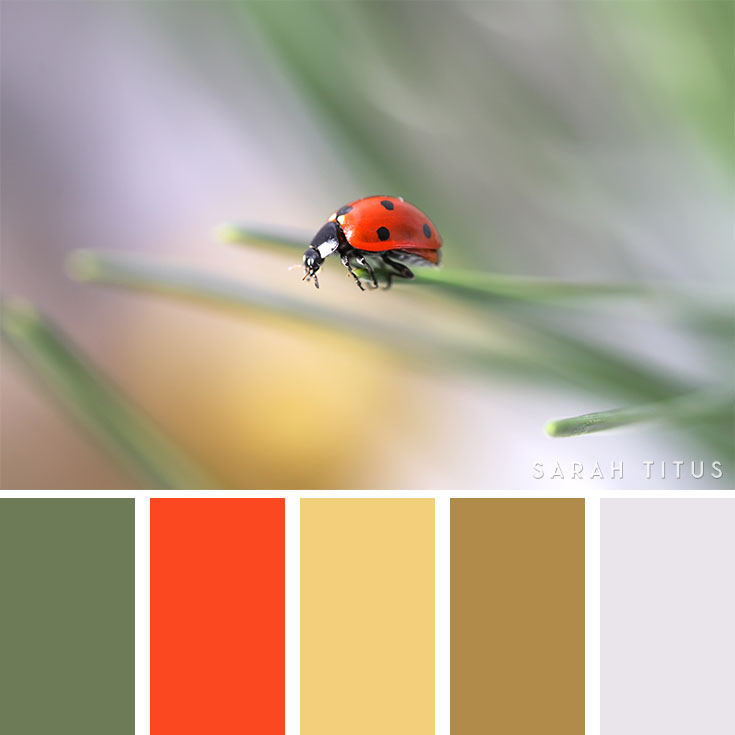 Do you need to plan a party, buy a new wardrobe, redesign your blog, or decorate your home for the summer season? These super cool25 Summer Color Palettes are all so beautiful and astonishing, I hope you get tons of ideas and inspiration for all your plans during this season!