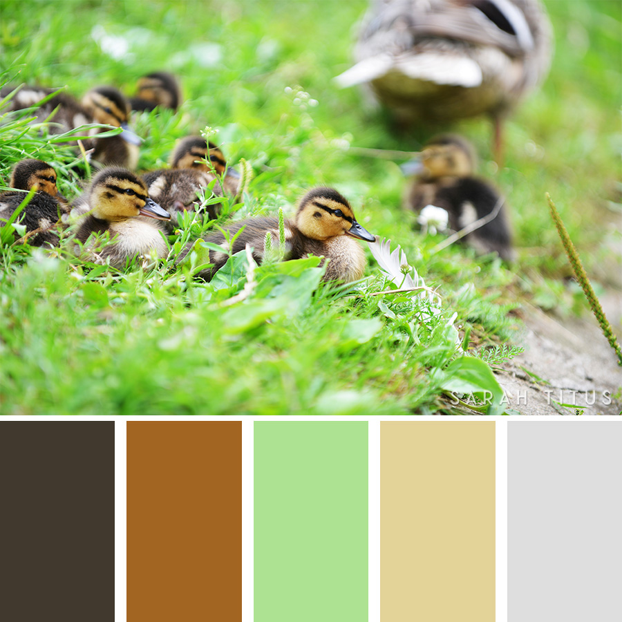 Have you ever been stuck because you don't know how to mix and match colors? I have, and it sucks; let's get some help from the spring season to plan parties, choose new clothing, and decorate our homes with these beautiful25 Spring Color Palettes.