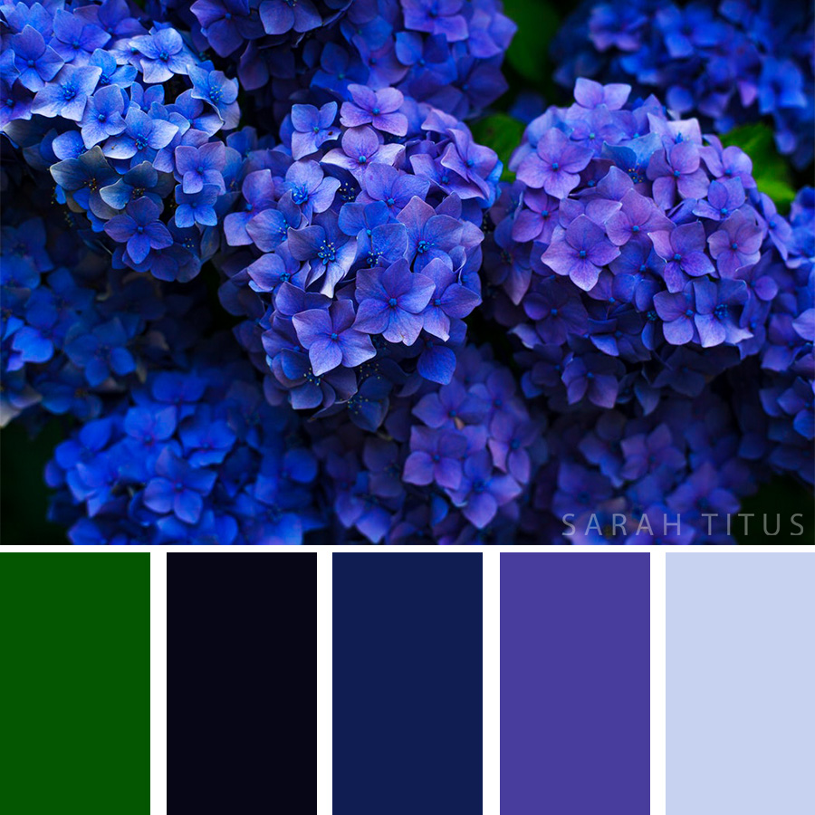 Beautiful Color Palette of deep blue and purple flowers