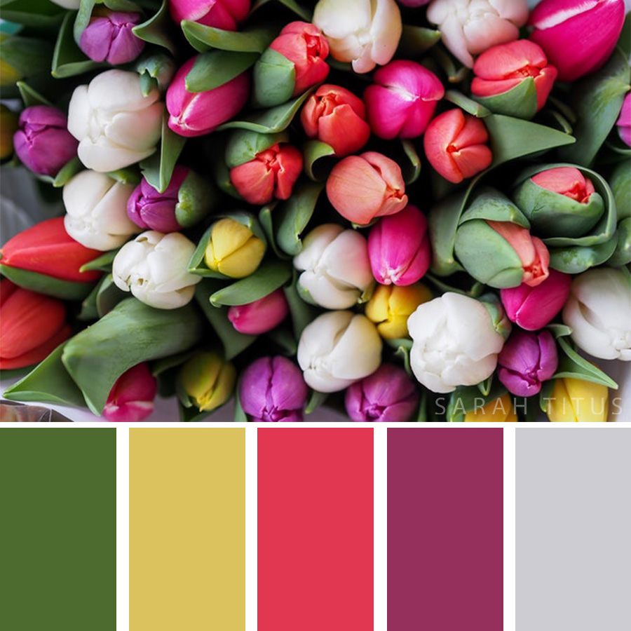 Beautiful Color Palette of different tulips