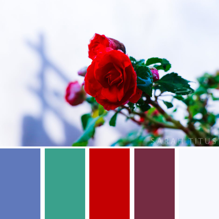 Beautiful color palette of red roses