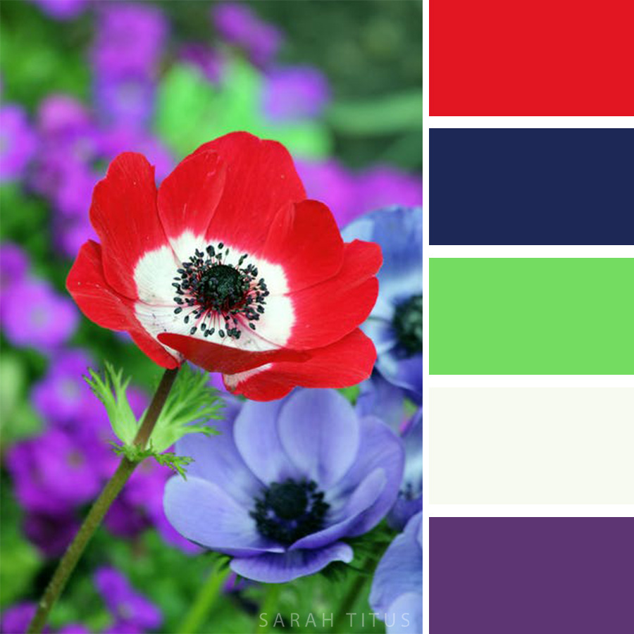 Gorgeous Red and purple flowers Color Palette