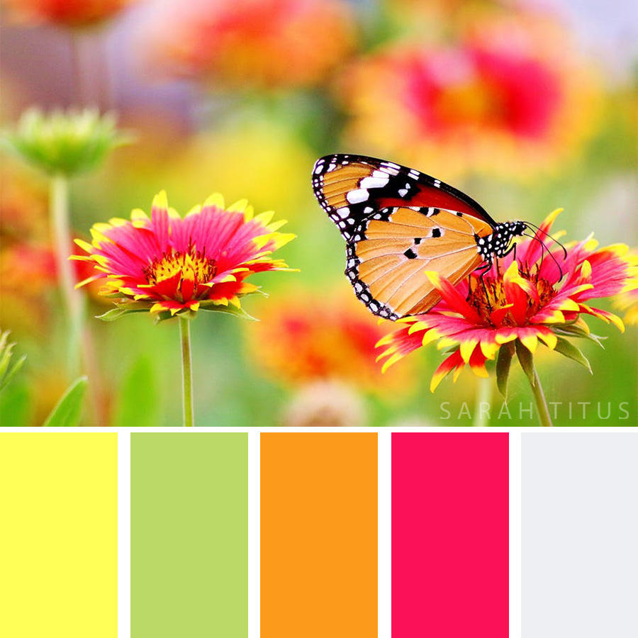 Red and yellow flowers with a beautiful butterfly Color Palette