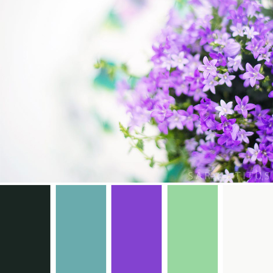 Purple Flowers color palette on a beautiful white background