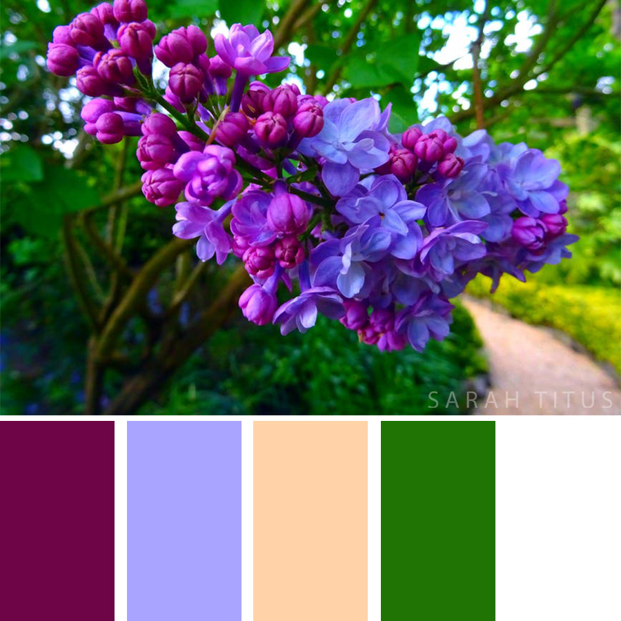 Purple flower hanging from a tree - Color Palette