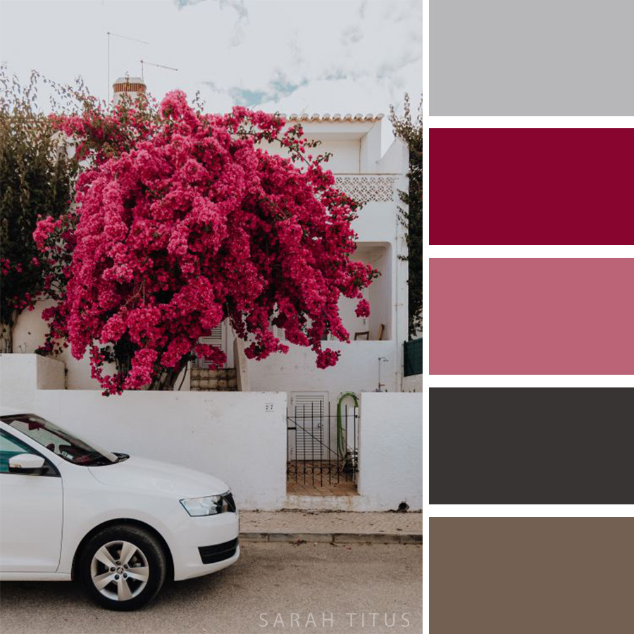 Beautiful white home with an astonishing pink tree Color Palette