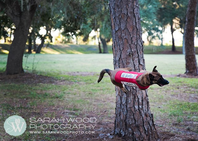 st petersburg dog photographer 10