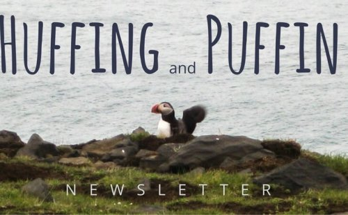 Puffin Logo Sara Kurth newsletter