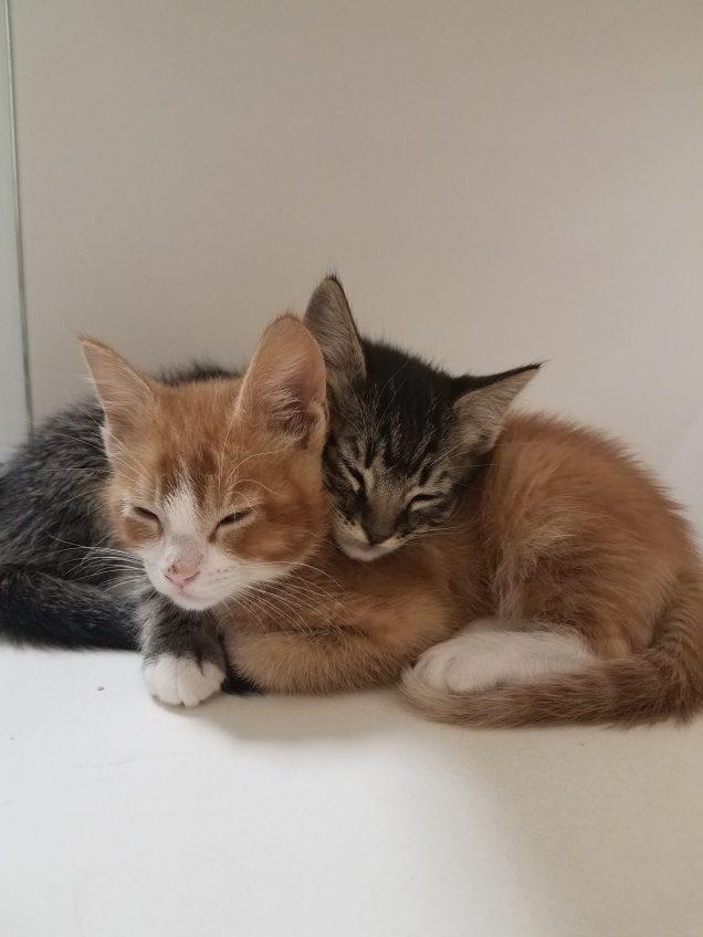 Kittens!!