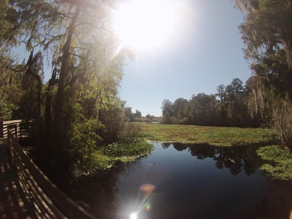 Lettuce Lake Park – Tampa, FL