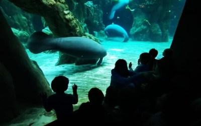 Sabato vieni all'Acquario? Nuovo incontro il 4 maggio per genitori e bimbi