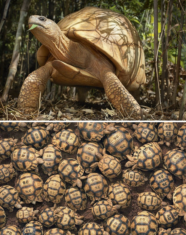 Photographer clicked photos of endangered animals