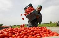 La ricchezza e la cassetta di pomodori (di Giampaolo Cassitta)