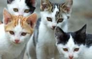 Gatti, amore e carabinieri. (di Giampaolo Cassitta)
