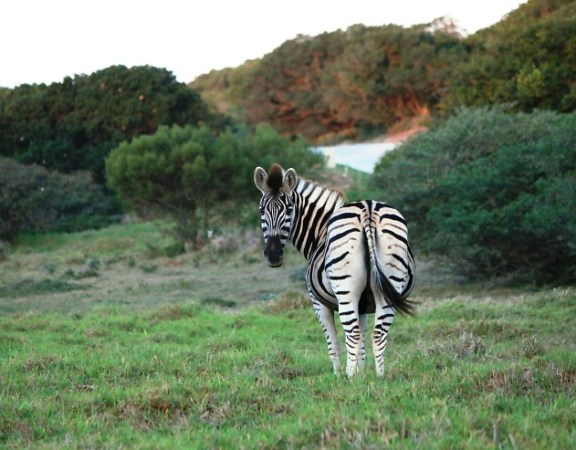 The animals on the Sardinia Bay Golf & Wildlife Estate forms an integral part of the complex