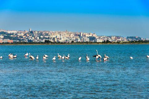 Wildlebende Flamingos