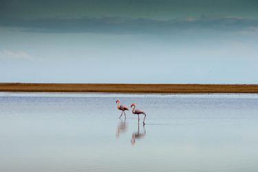 Flamingos in Chia