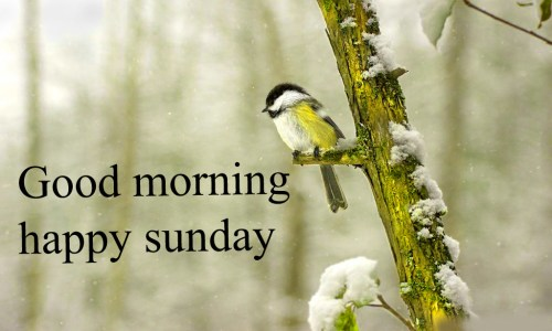Sunday Good Morning Images Wallpaper Photo Free HD Download