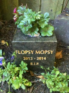 Pet Memorials - Flopsy