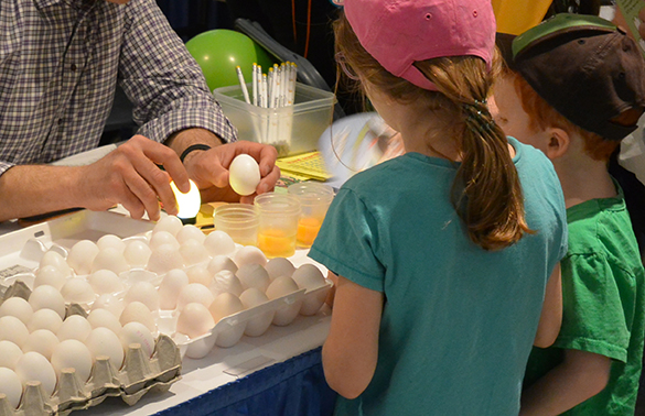 Egg candling at Ag in the City 2018