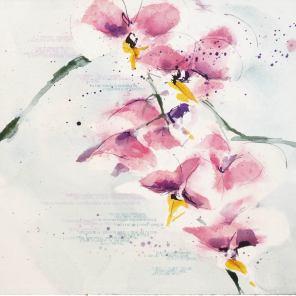 ORQUIDEA | ORQUÍDEA | Orchidaceae phalaenopsis