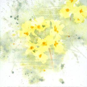 PRIMULA | PRÍMULA | Primula vulgaris