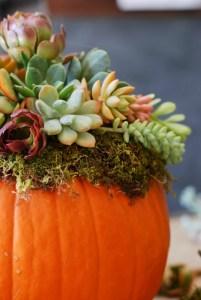 Pumpkin-Succulent-Arrangement-simplyhappenstance.com-65