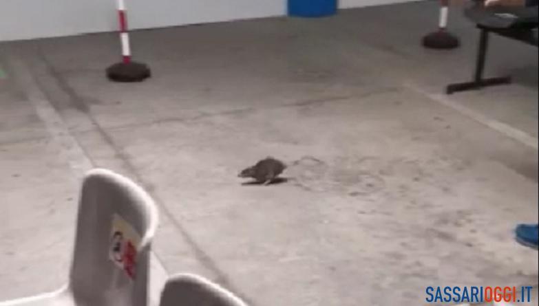 Un topo tra i pazienti in attesa del Palazzo Rosa, il video diventa virale