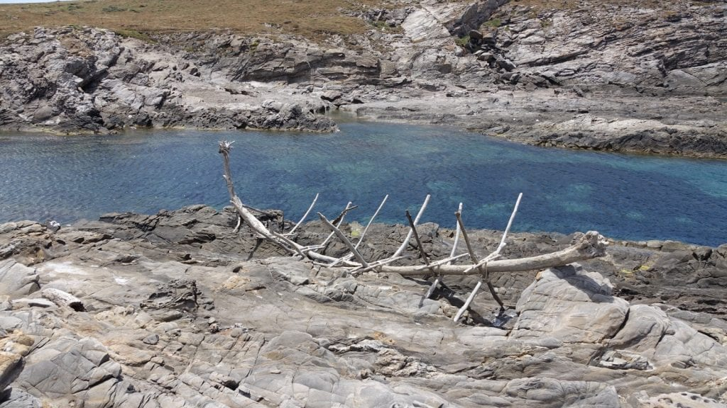 La Sardegna alla Biennale di Venezia con l'isola dell'Asinara